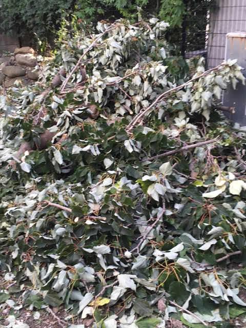 落ちた枝たち