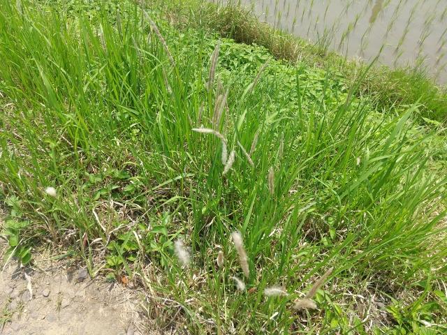 梅雨明けに草刈&防草対策しないと夏以降大変なことに!?